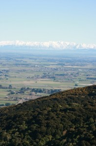 Lincoln with the Southern Alps behind. Photo taken from Banks Peninsula.